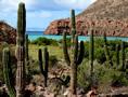 baja.mexico-cardon-cactus