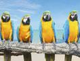 guacamaya-birds