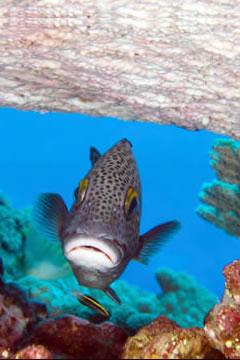 Tonga picture 6